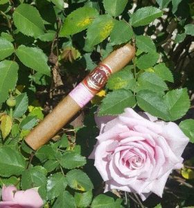 Cigar News: Southern Draw Cigars Ships the Rose of Sharon